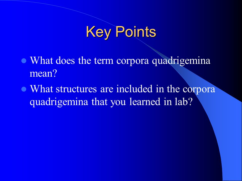 Key Points What does the term corpora quadrigemina mean