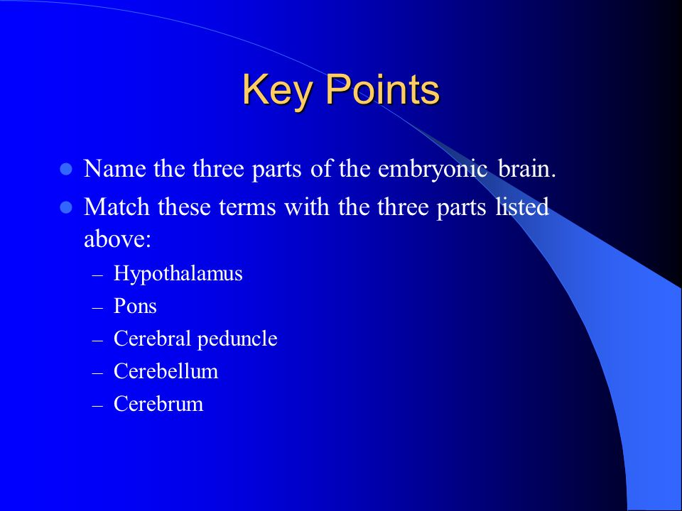 Key Points Name the three parts of the embryonic brain.