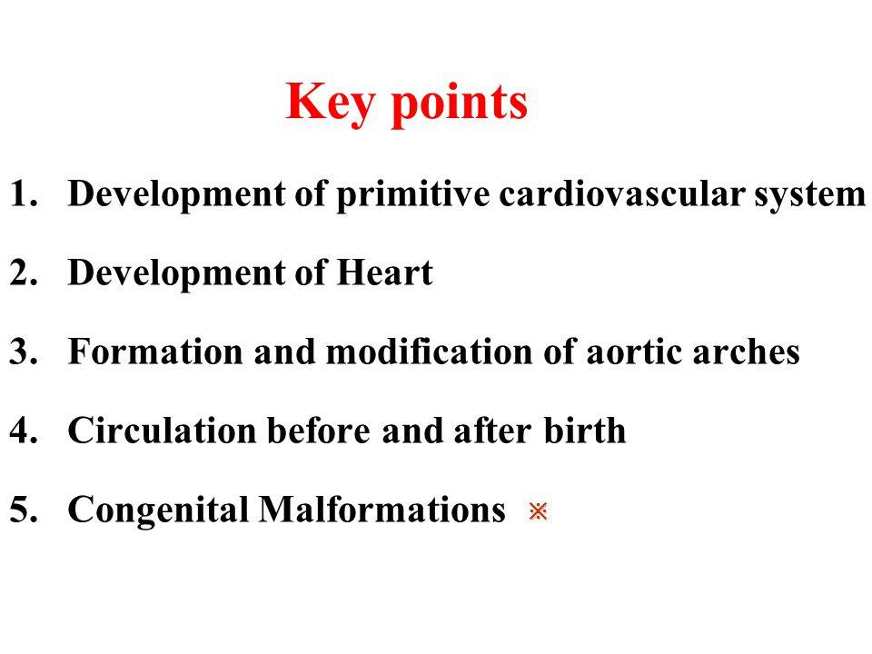 Key points Development of primitive cardiovascular system