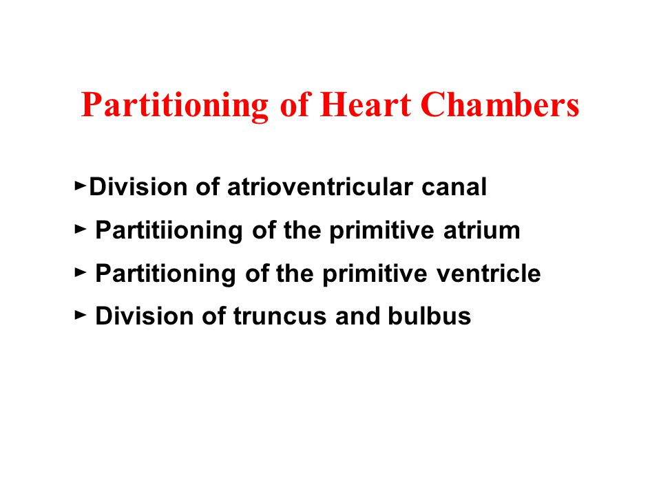 Partitioning of Heart Chambers