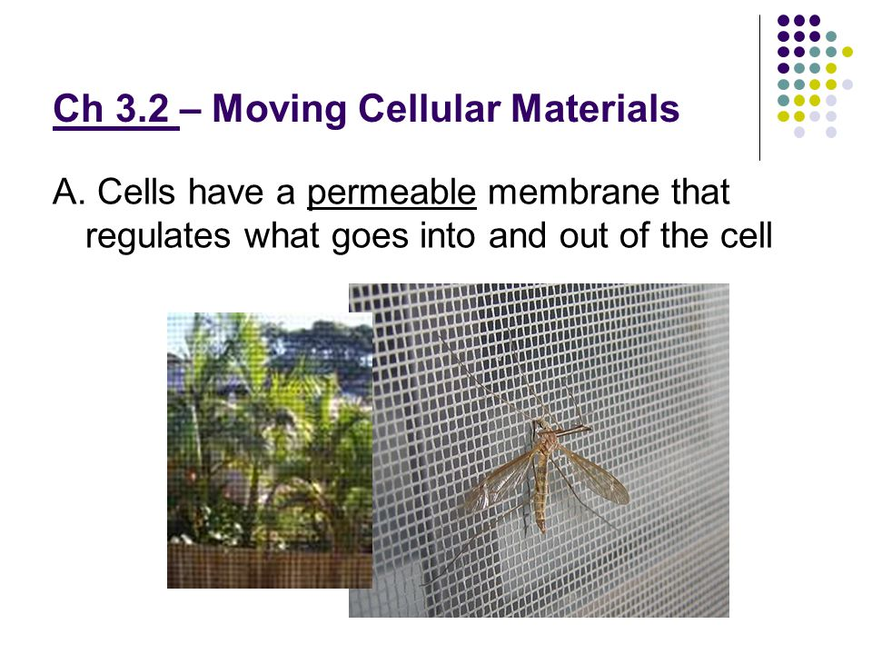 Ch 3.2 – Moving Cellular Materials