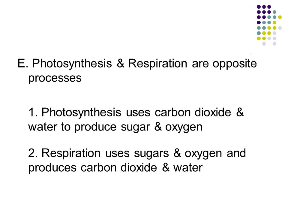 E. Photosynthesis & Respiration are opposite processes 1