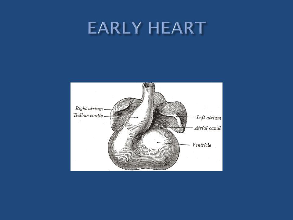 EARLY HEART