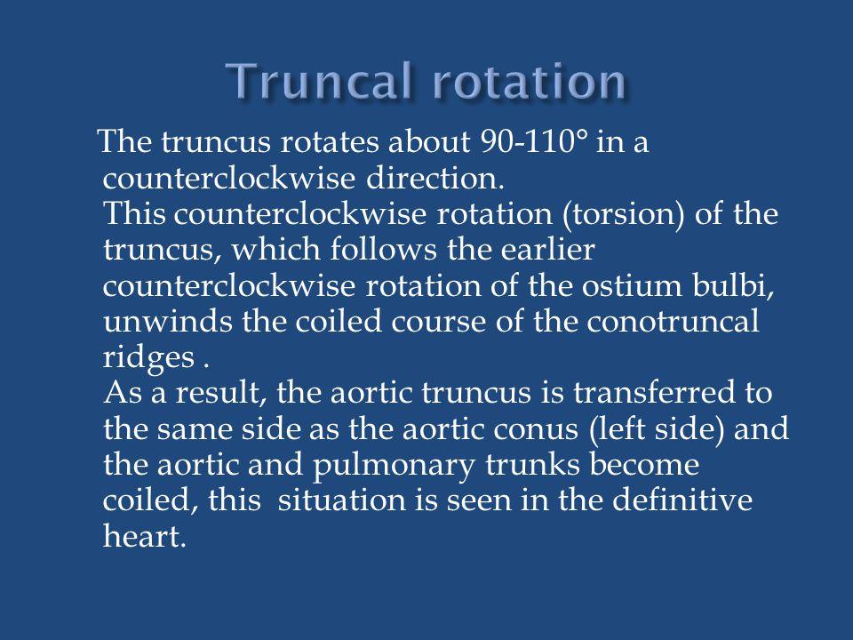 Truncal rotation