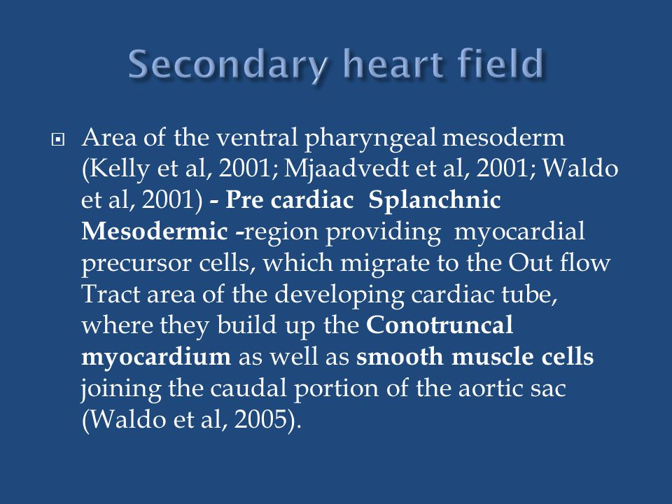 Secondary heart field