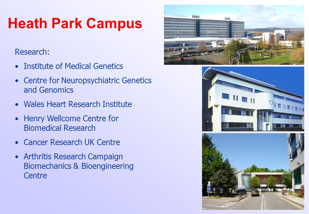 Heath Park Campus Research: Institute of Medical Genetics