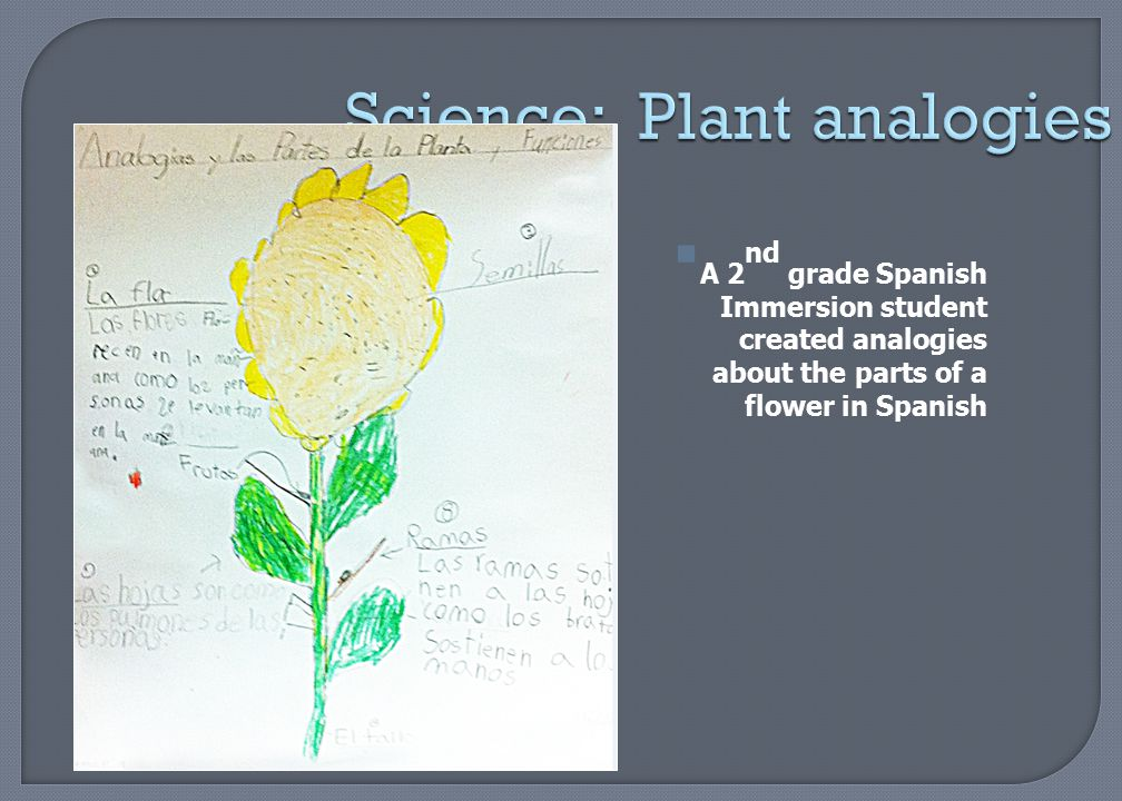Science: Plant analogies