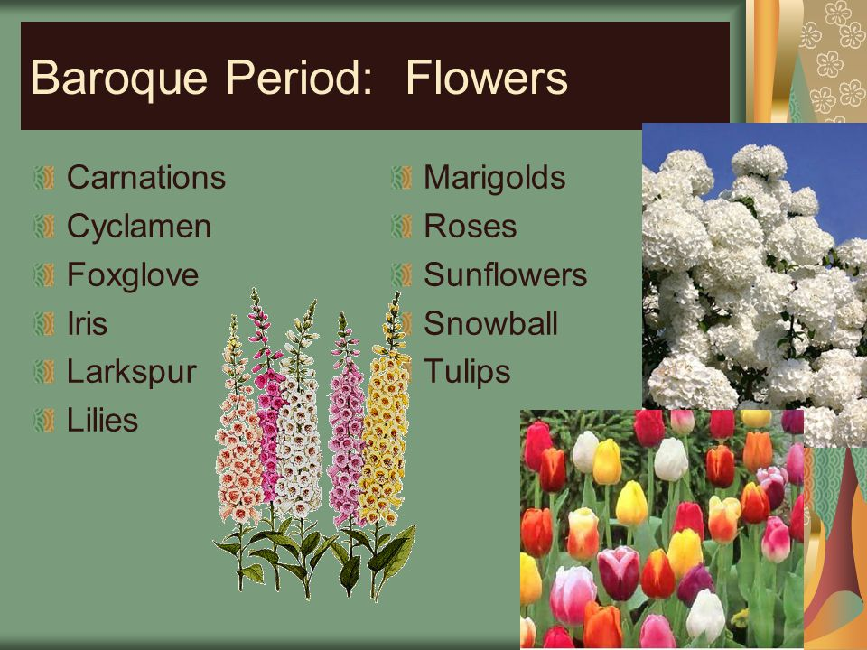 Baroque Period: Flowers