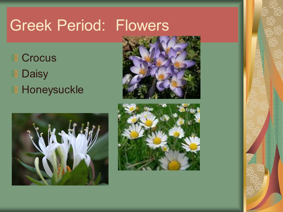 Greek Period: Flowers Crocus Daisy Honeysuckle