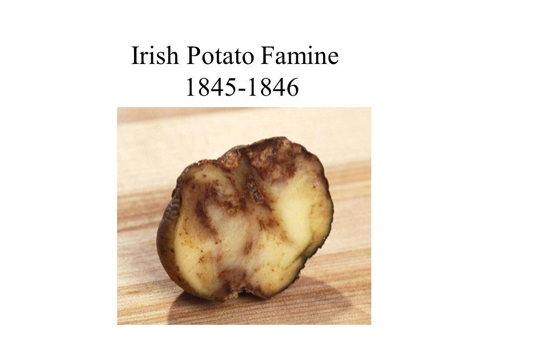 Irish Potato Famine 1845-1846