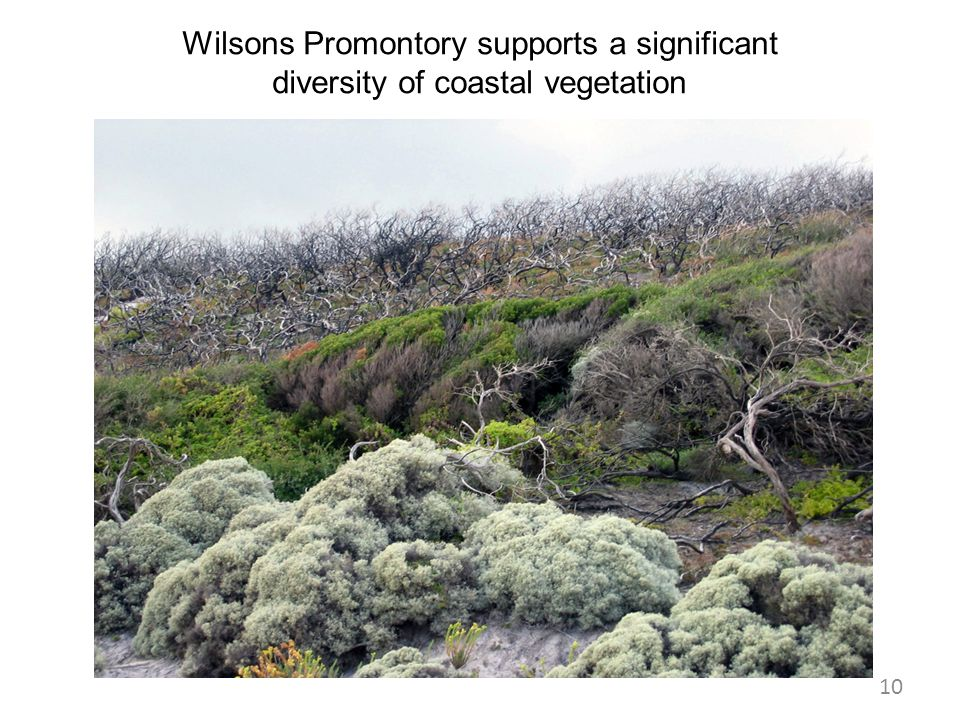 Wilsons Promontory supports a significant diversity of coastal vegetation
