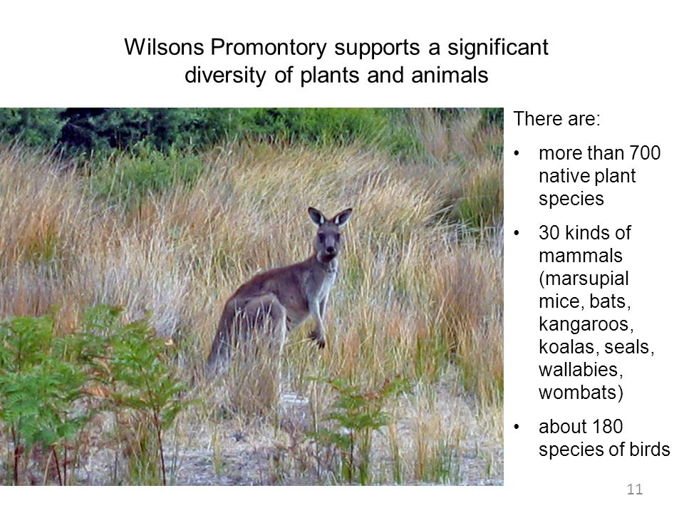 Wilsons Promontory supports a significant diversity of plants and animals