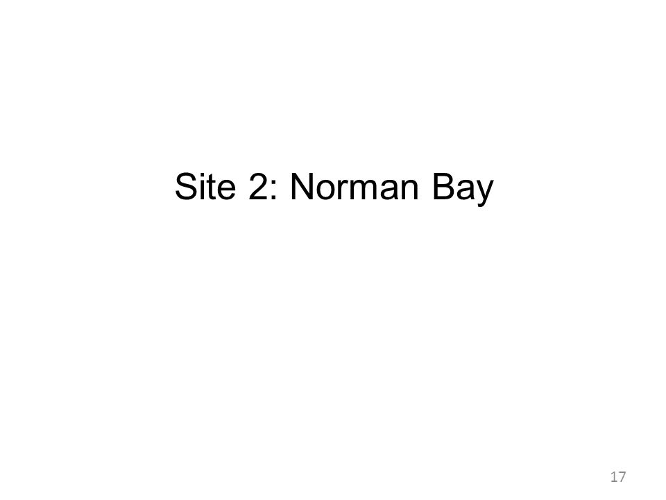 Site 2: Norman Bay