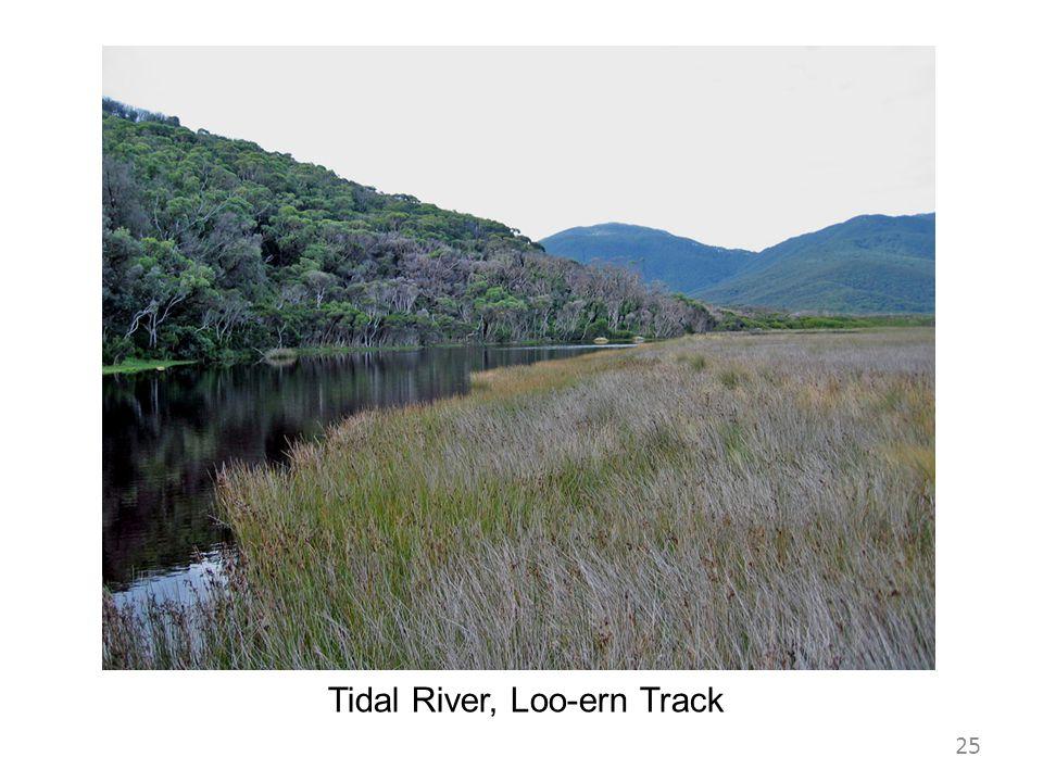 Tidal River, Loo-ern Track