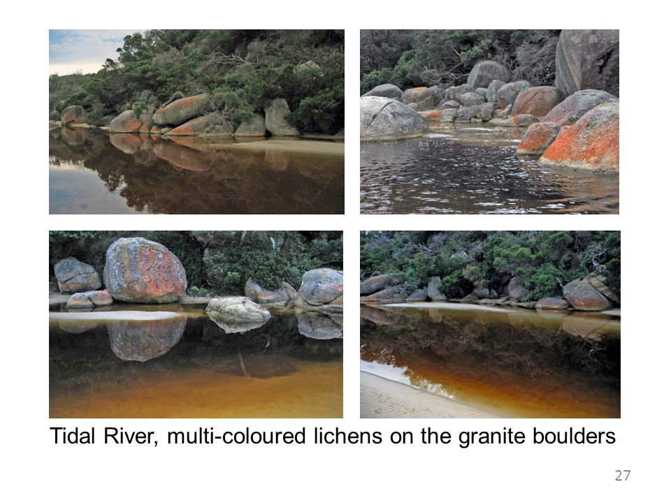 Tidal River, multi-coloured lichens on the granite boulders