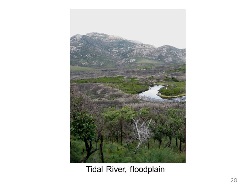 Tidal River, floodplain