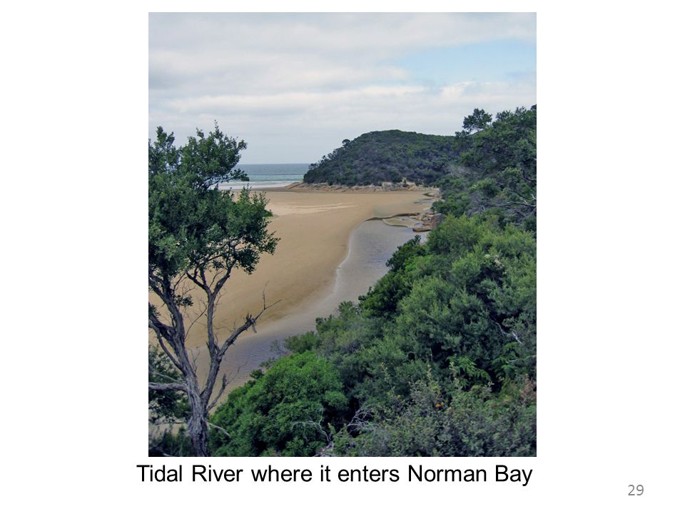Tidal River where it enters Norman Bay