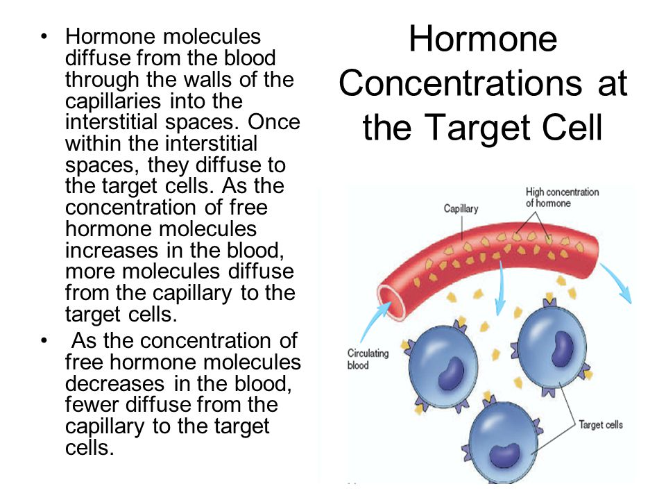 Hormone Concentrations at the Target Cell