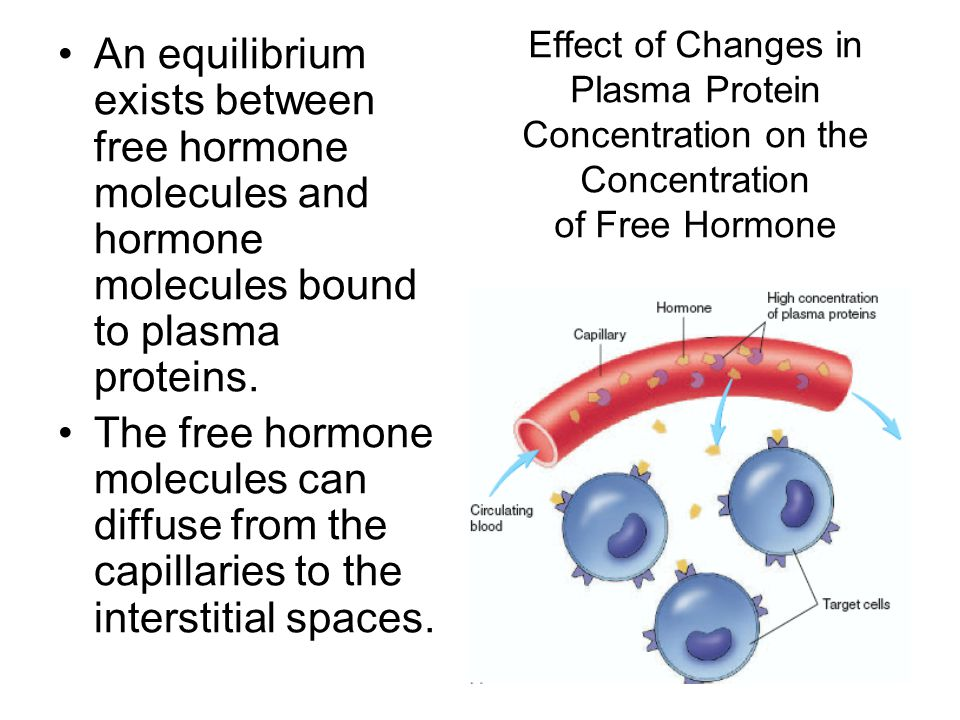 An equilibrium exists between free hormone molecules and hormone molecules bound to plasma proteins.