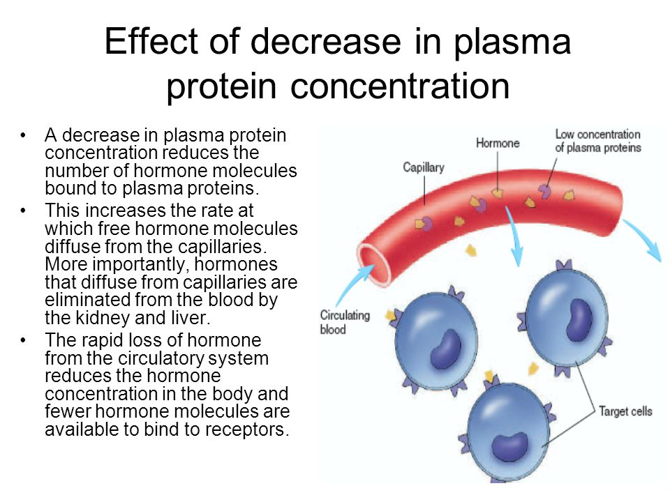Effect of decrease in plasma protein concentration