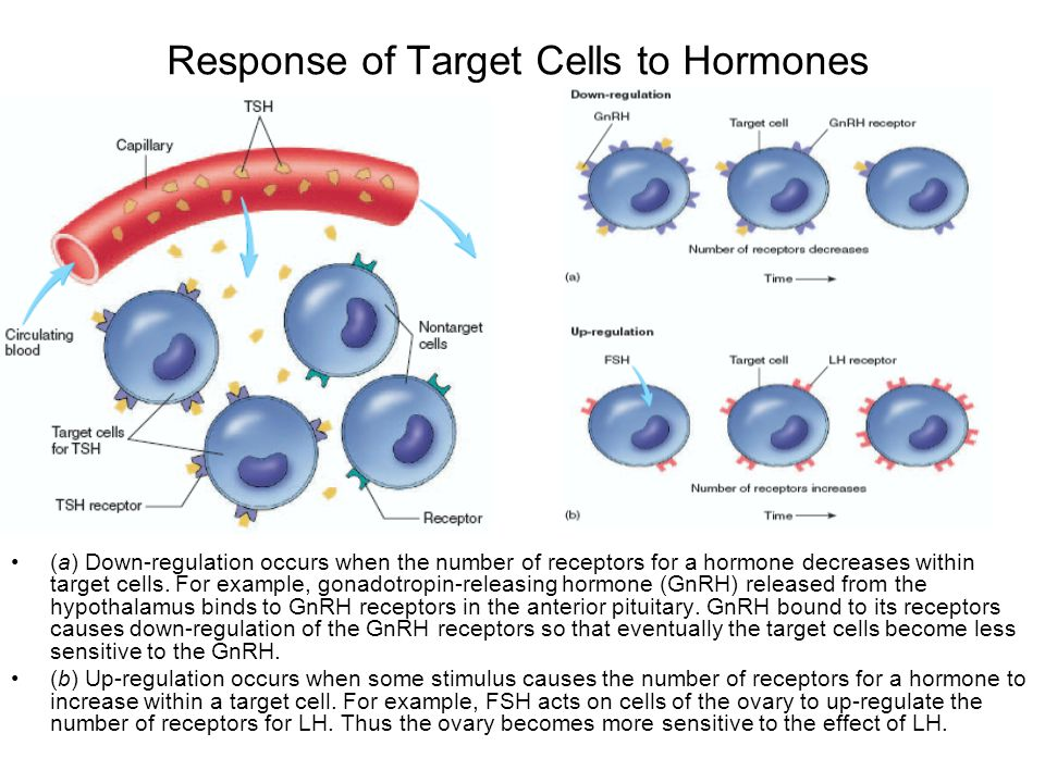 Response of Target Cells to Hormones