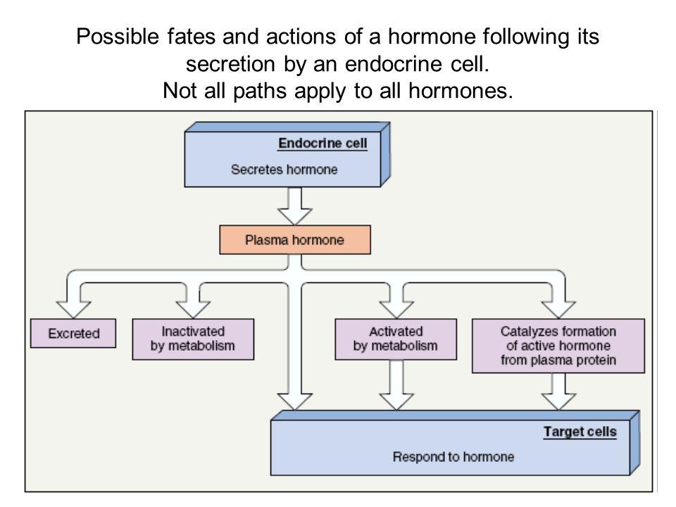 Possible fates and actions of a hormone following its secretion by an endocrine cell.