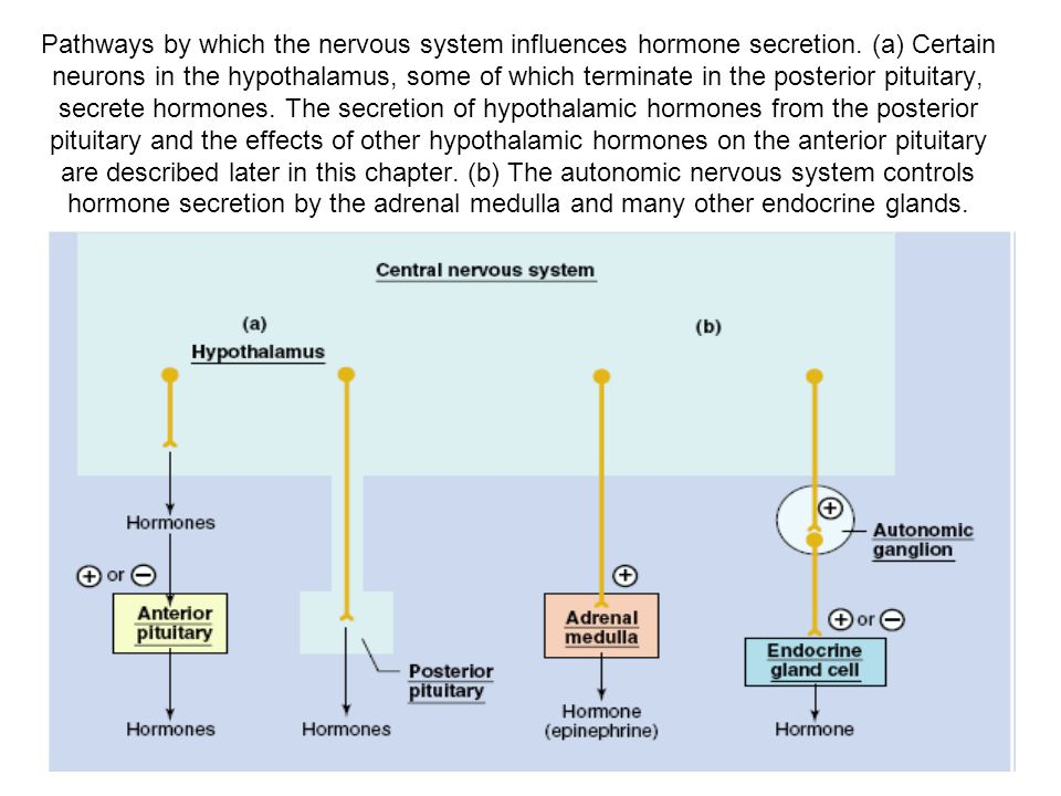 Pathways by which the nervous system influences hormone secretion