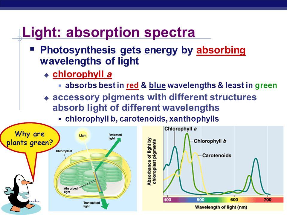 Light: absorption spectra