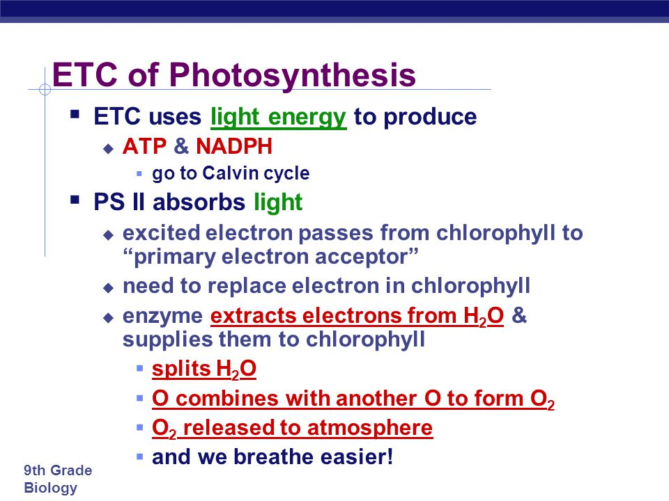 ETC of Photosynthesis ETC uses light energy to produce