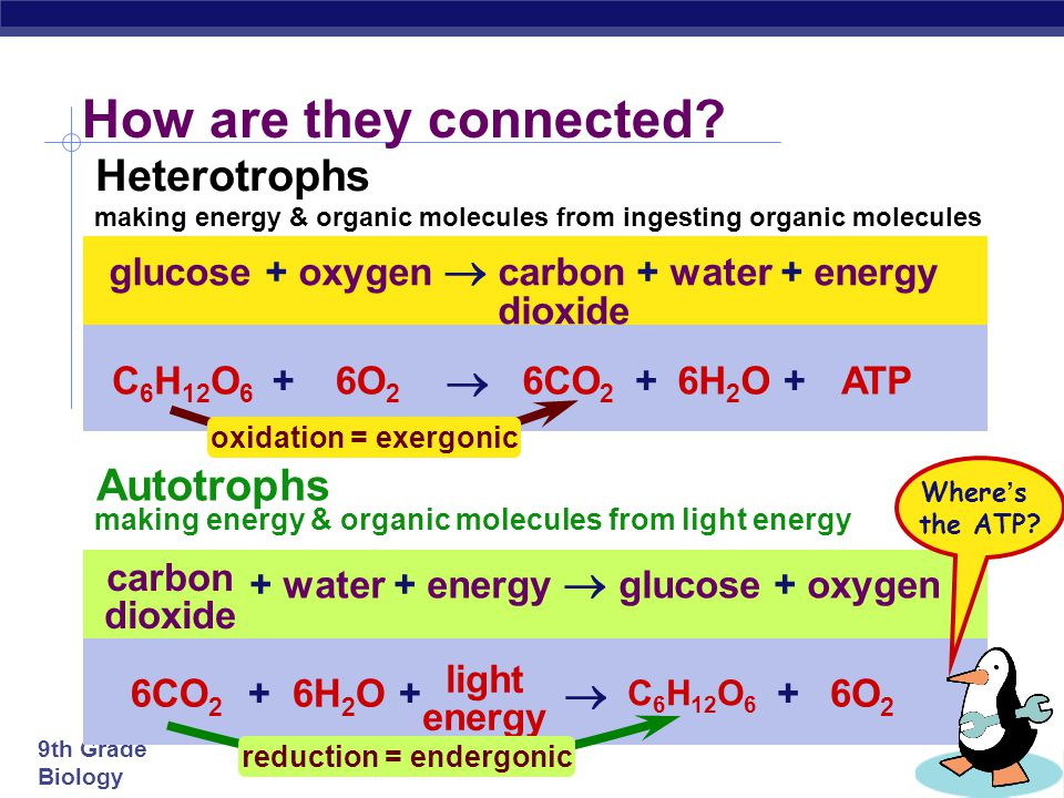making energy & organic molecules from ingesting organic molecules