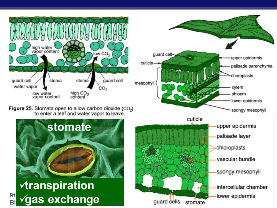stomate transpiration gas exchange