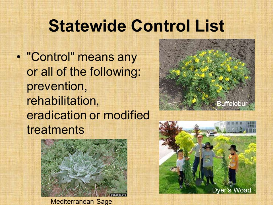 Statewide Control List