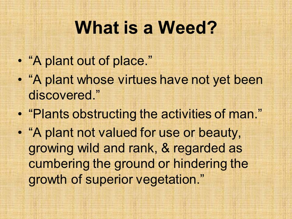 What is a Weed A plant out of place.