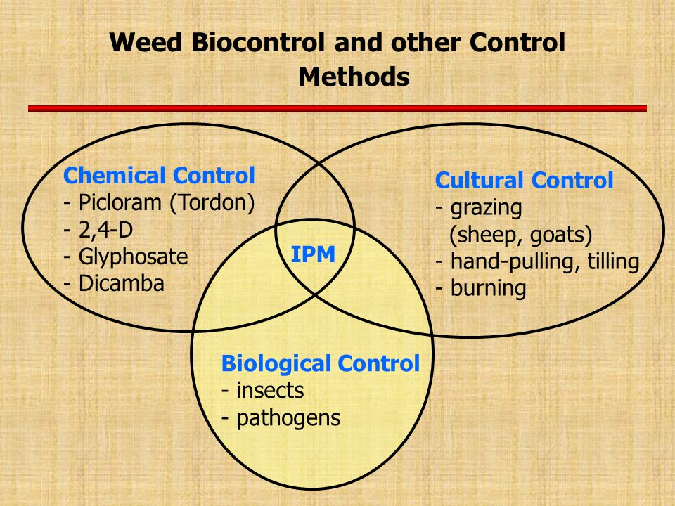 Weed Biocontrol and other Control Methods