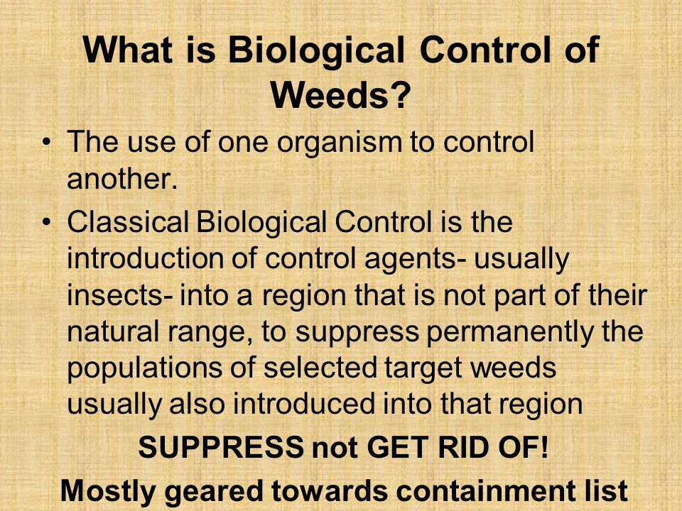 What is Biological Control of Weeds