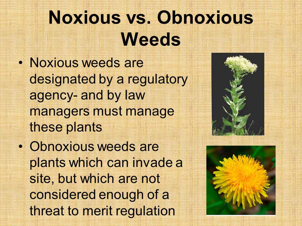 Noxious vs. Obnoxious Weeds