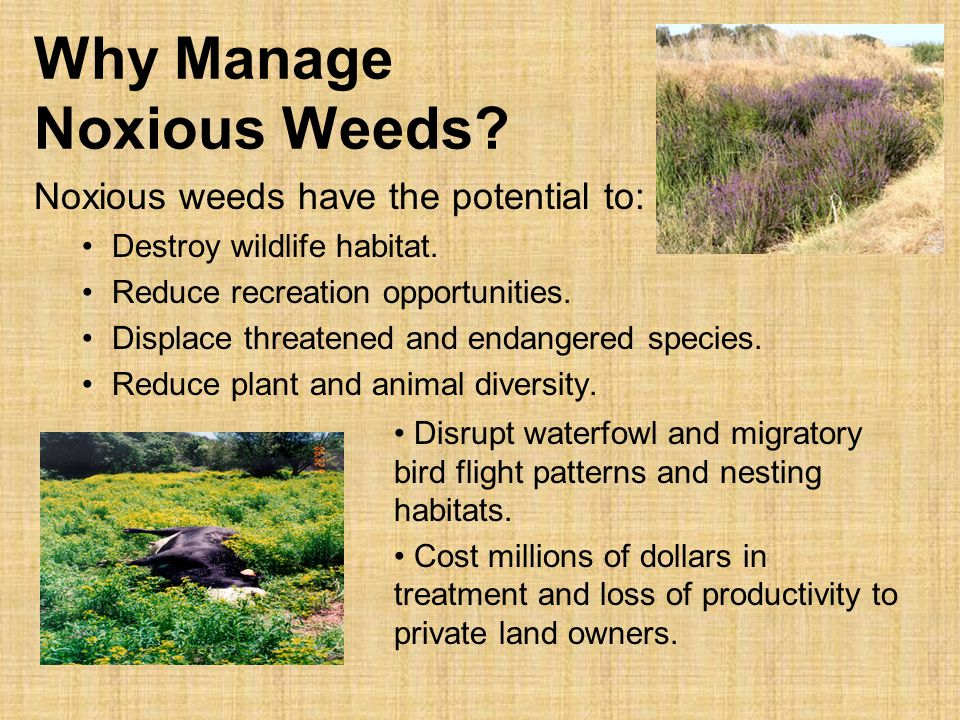 Why Manage Noxious Weeds