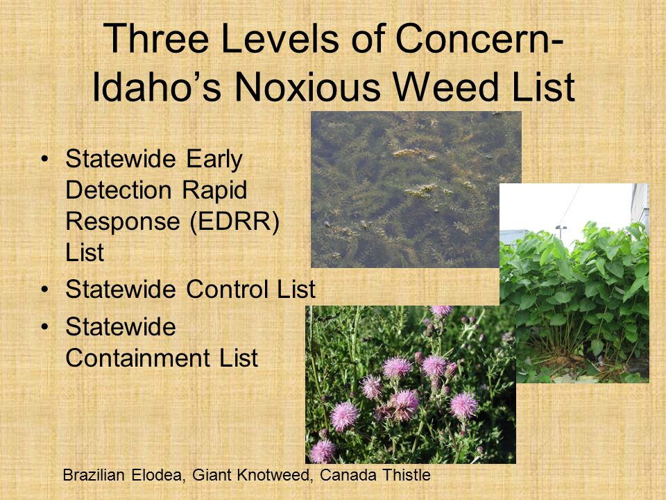 Three Levels of Concern- Idaho's Noxious Weed List