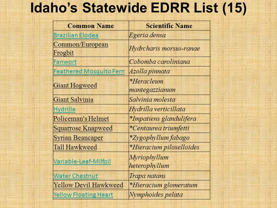 Idaho's Statewide EDRR List (15)