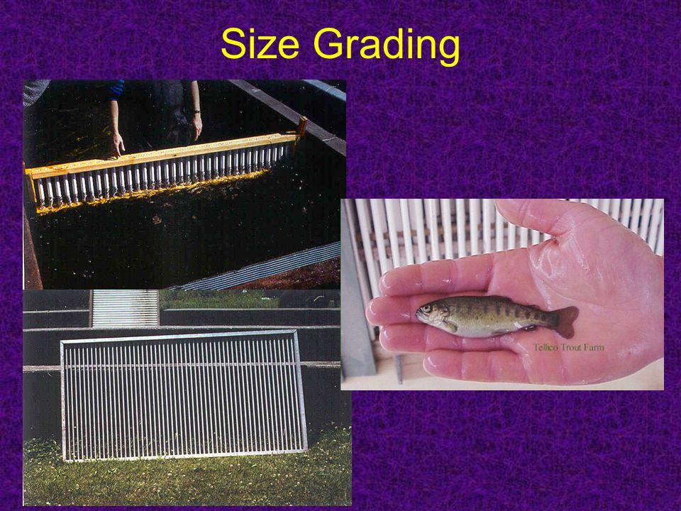 Size Grading