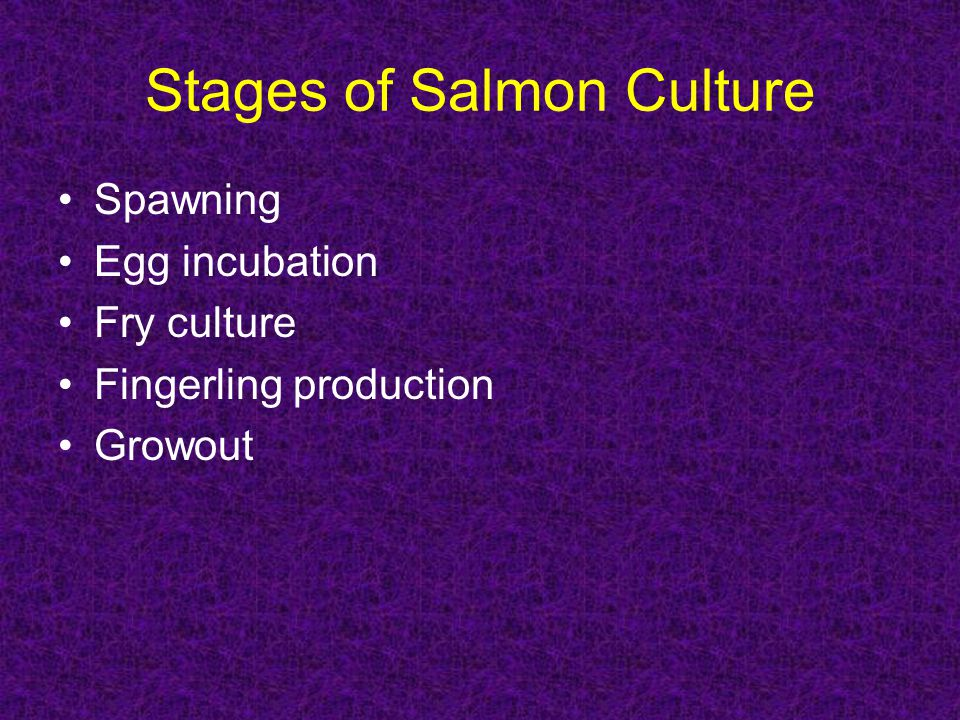 Stages of Salmon Culture