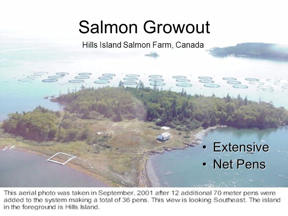 Salmon Growout Hills Island Salmon Farm, Canada Extensive Net Pens