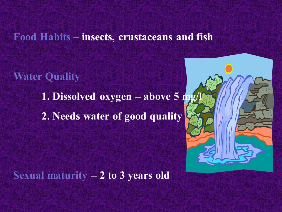 Food Habits – insects, crustaceans and fish