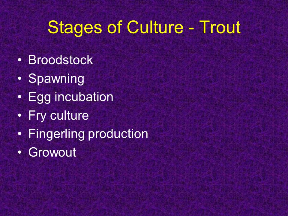 Stages of Culture - Trout