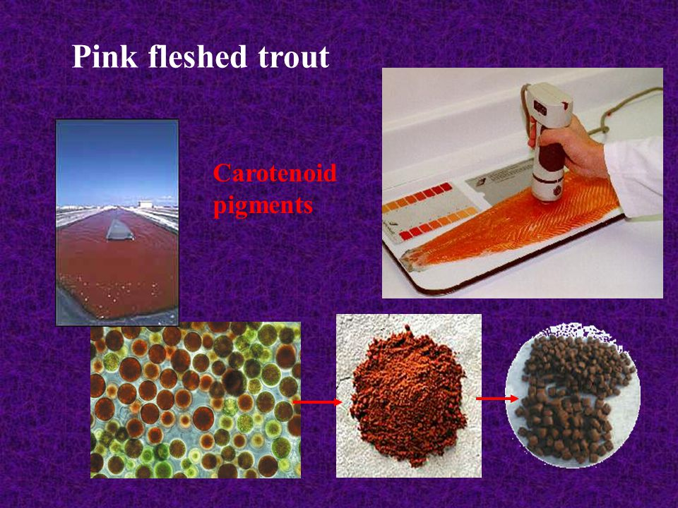 Pink fleshed trout Carotenoid pigments