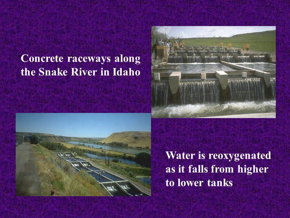 Concrete raceways along the Snake River in Idaho