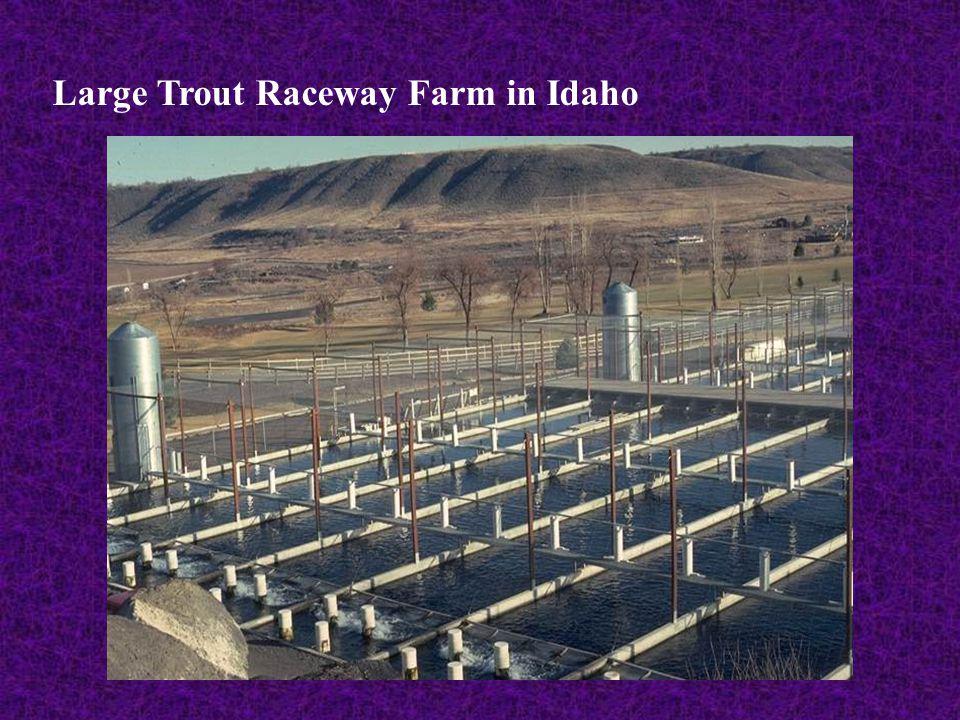 Large Trout Raceway Farm in Idaho