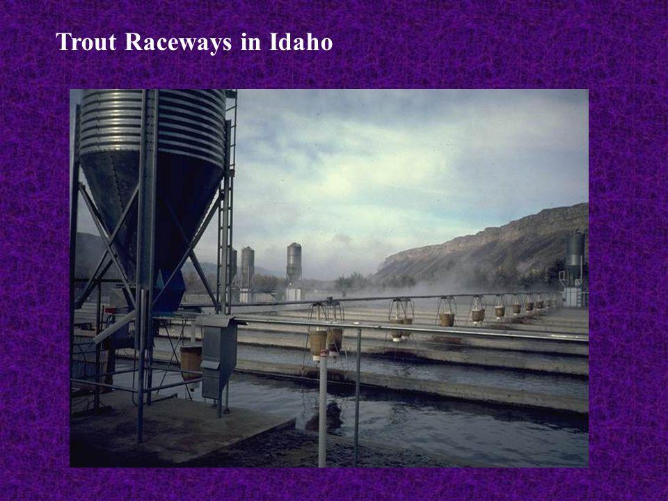 Trout Raceways in Idaho