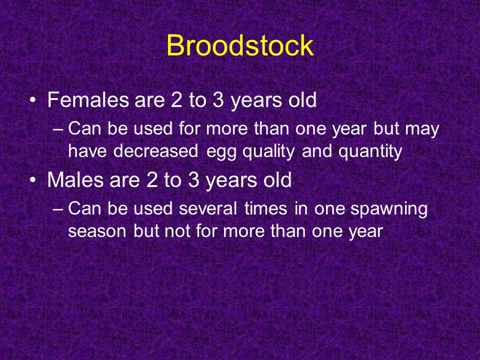 Broodstock Females are 2 to 3 years old Males are 2 to 3 years old