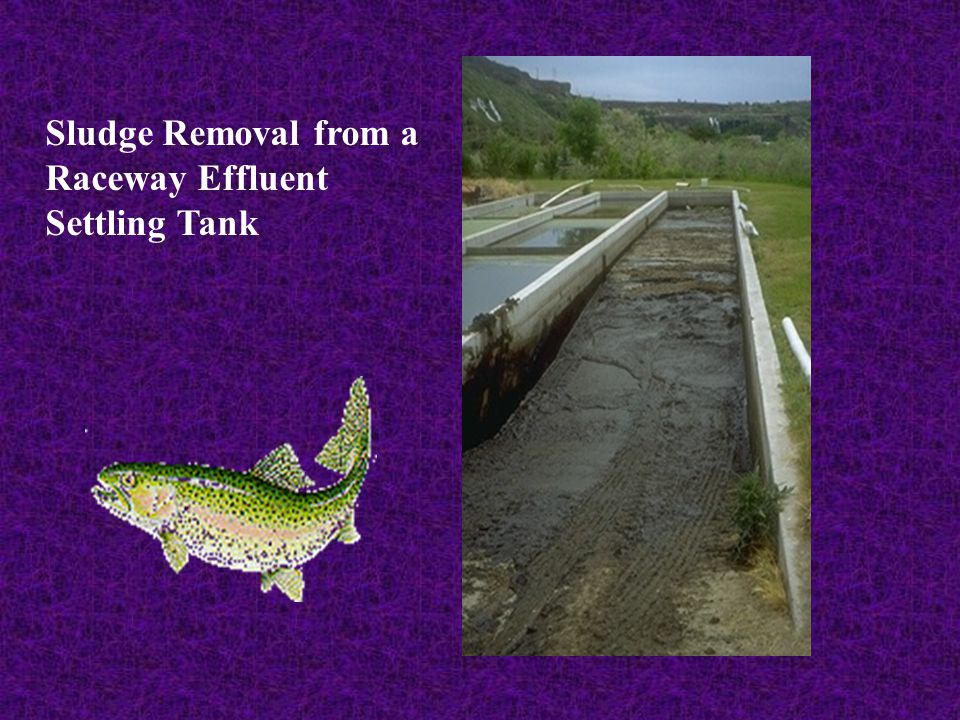 Sludge Removal from a Raceway Effluent Settling Tank